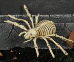 Pók csontváz